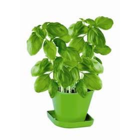 Souprava pro pěstování bylinek Tescoma SENSE, bazalka