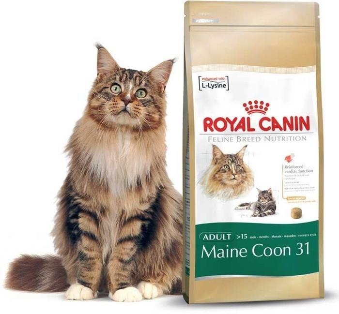 granule royal canin maine coon 10 kg. Black Bedroom Furniture Sets. Home Design Ideas