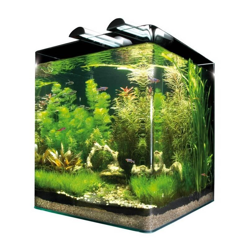 akwarium dennerle nano cube 60l szklane. Black Bedroom Furniture Sets. Home Design Ideas