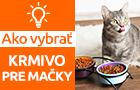 Ako vybrať správne krmivo pre mačky?