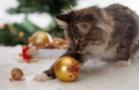 Tipy na darčeky pre mačky