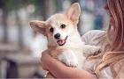 Výbava pre šteniatka