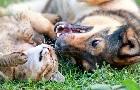 Antiparazitiká pre mačky a psy