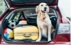 Užitočné tipy, ako zvládnuť cestovanie so psom