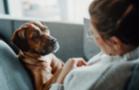 Ako posilniť zdravie a imunitu psa?