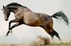 Ako sa postarať o konské kĺby?