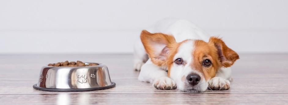 Kedy zmeniť krmivo pre psa
