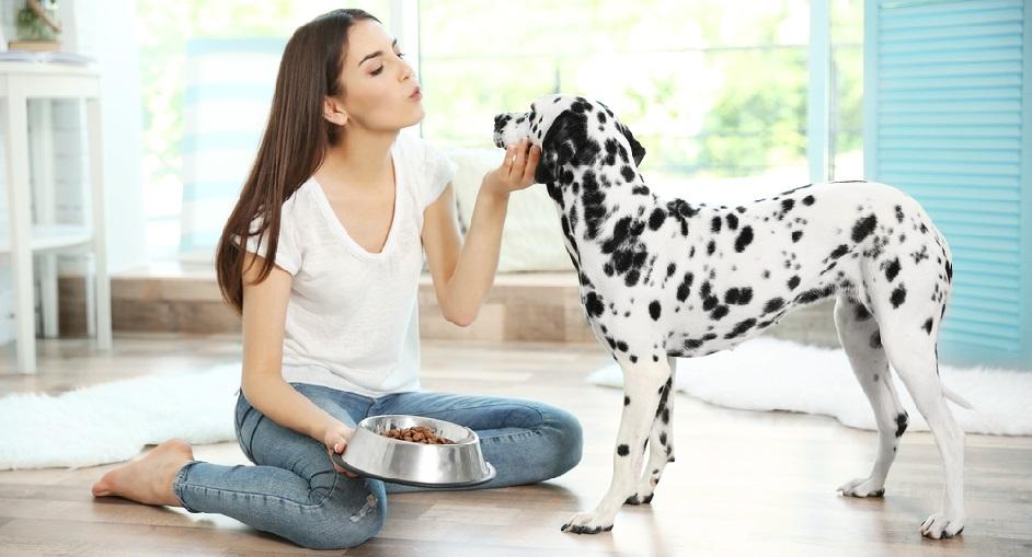 Ako vybrať krmivo pre psa