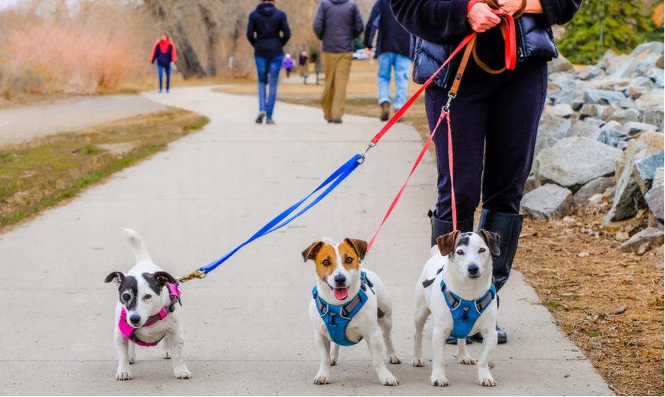 Dareos vcvik psov, hotel pre psov - Home Facebook