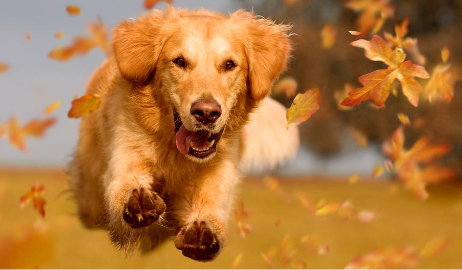 Imunita a zdravie psa