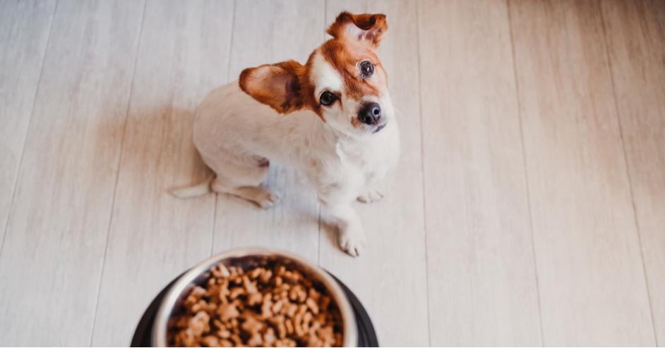 Zdravie a imunita psa