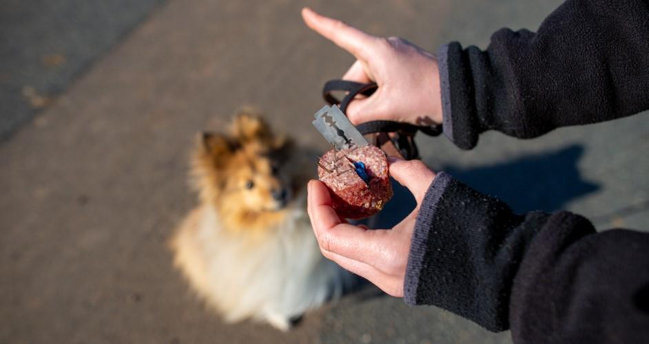 Nebezpečné nástrahy pre psa