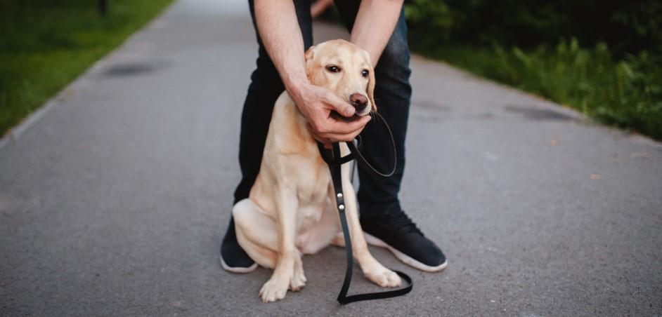Vyberanie z papule psa