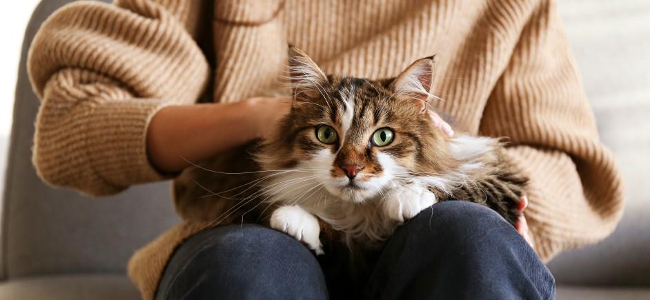 Mačka domáca