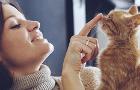 Jak vybrat správné kočičí krmivo?