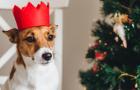 [Ne]tradiční Vánoce ve světě